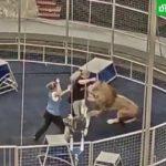 нападение льва на дрессировщика в Большом московском цирке
