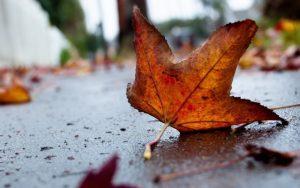 Какая погода осенью ожидает казахстанцев