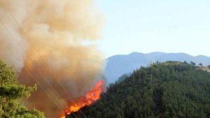В Анталье тушат лесной пожар