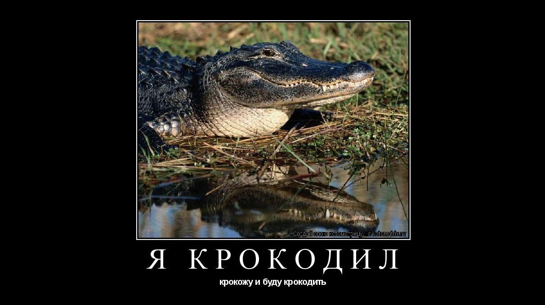 Я крокодил крокожу и буду крокодить