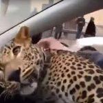леопард в такси Екатеринбург
