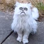 страшный белый кот с большими глазами мем