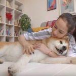 Алина Загитова реклама матрасов для собак
