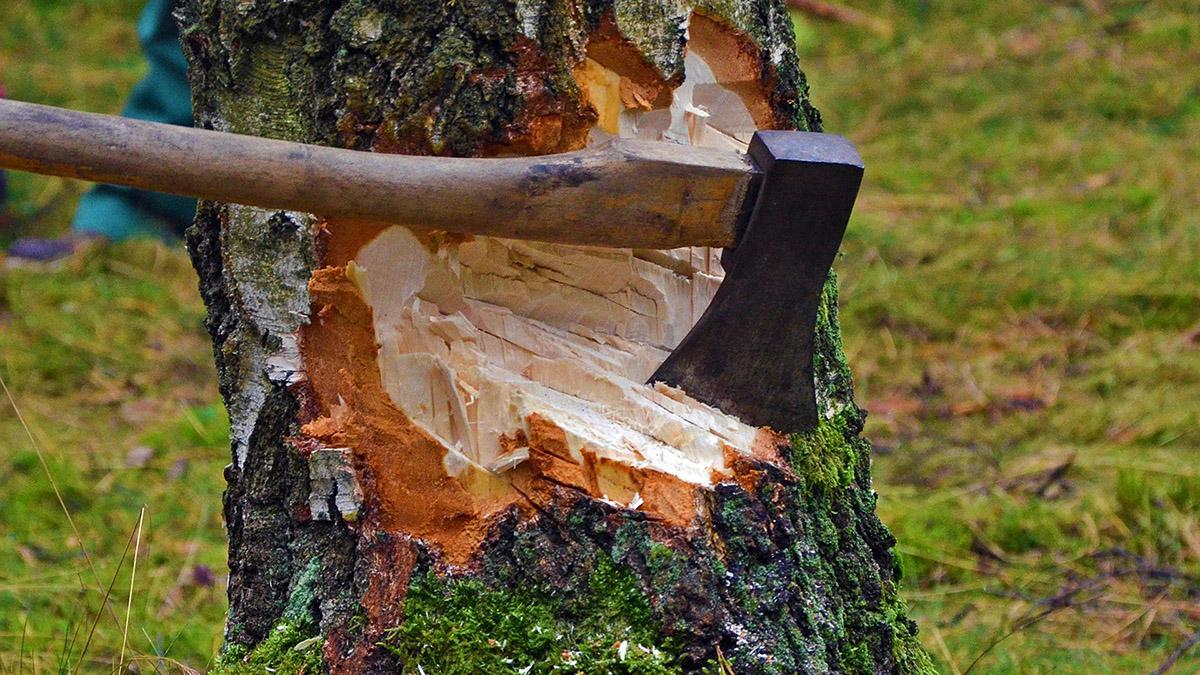 картинки рубленных деревьев ларьки имели